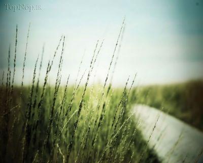 عکس هاي پس زمينه HD ، تصاوير ماکرو (66 عکس)